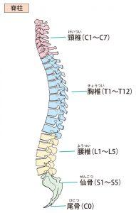 腰痛 症 急性